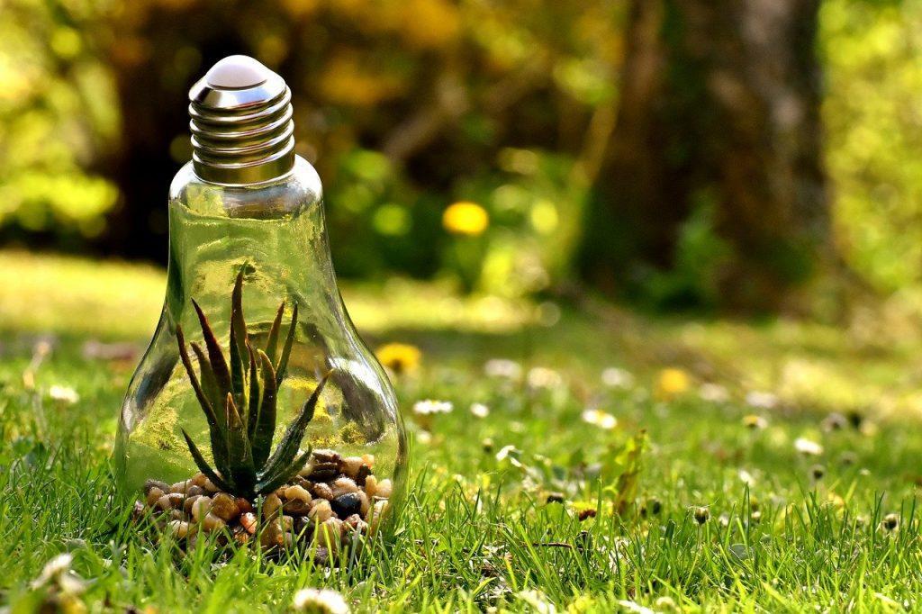plant inside lightbulb